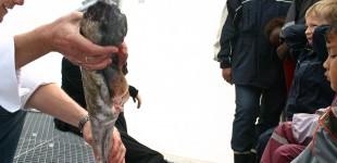 Konference: Fiskens Dag